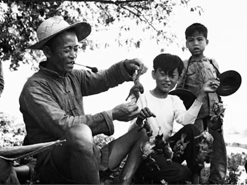 """Contadini cinesi alle prese con la """"Guerra ai Passeri"""" organizzata da Mao Zedong"""